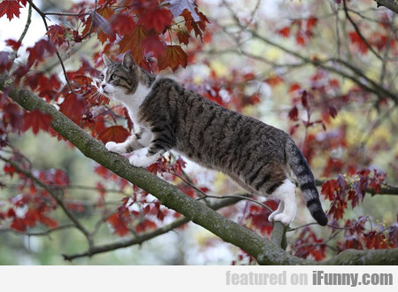 Cat On A Tree 1